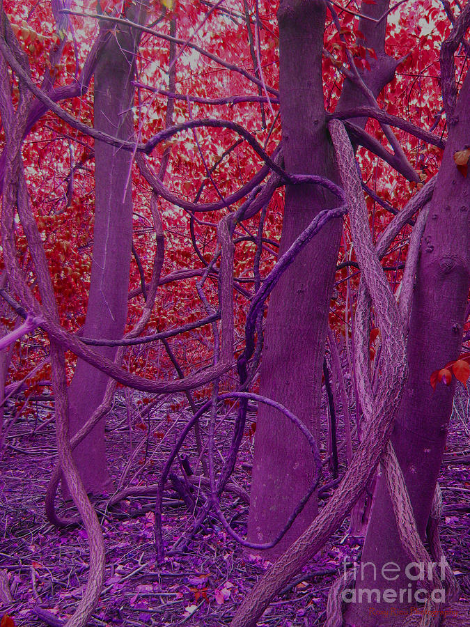 outdoors pograph nature pico in red purple by roxy riou