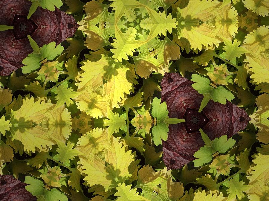 Leaves Photograph - Nature Reflection by Sylvan Adams