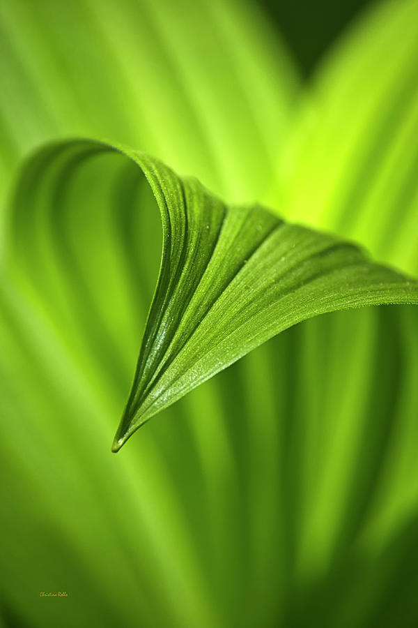 Nature Photograph - Nature Unfurls by Christina Rollo