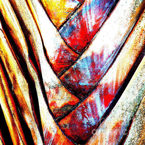 Palm Tree Photograph - Nature Weave by Rose  Hill