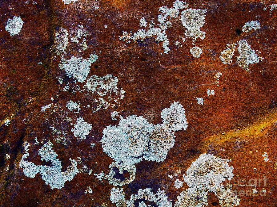Natures Abstractions by Patricia Griffin Brett