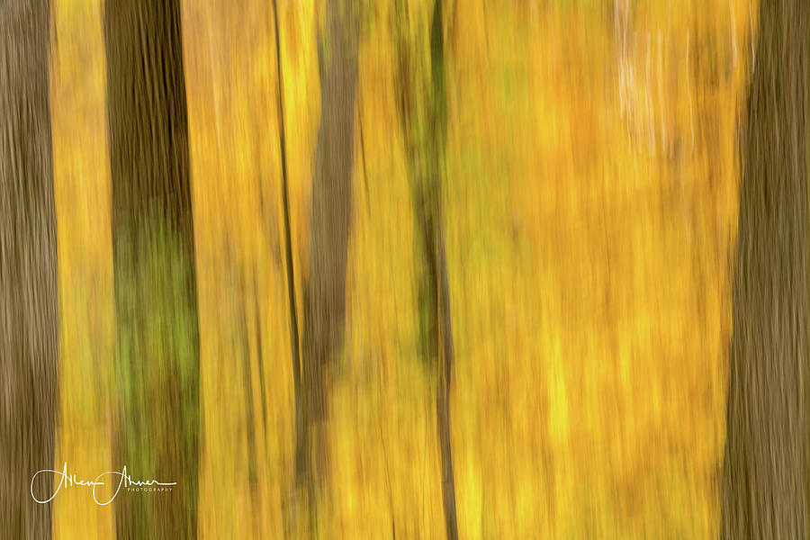 Nature's Artist Brush by Allen Ahner