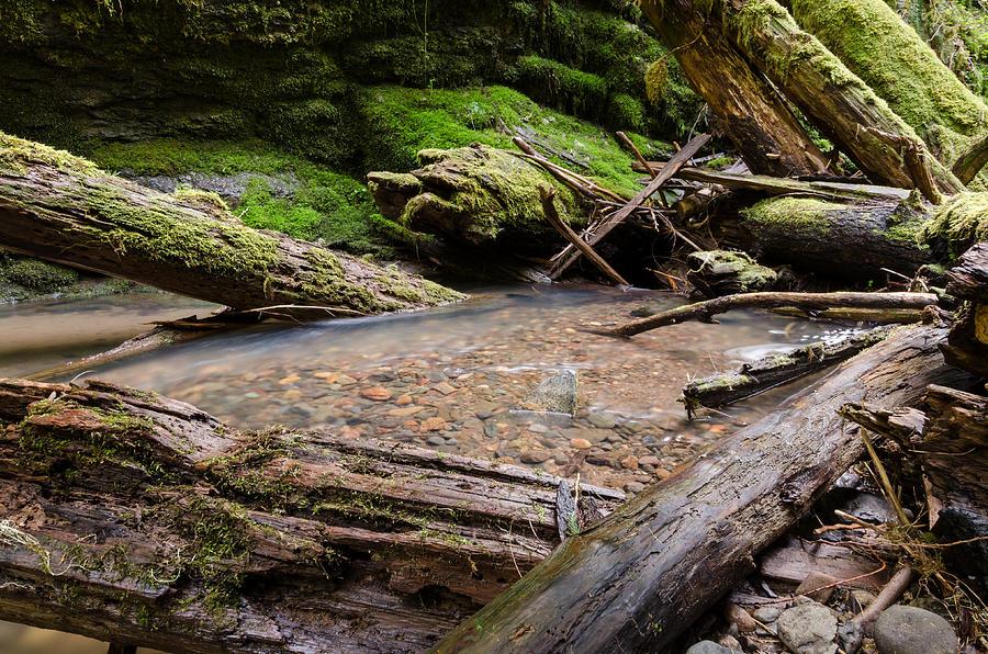 Oregon Photograph - Natures Artwork by Margaret Pitcher