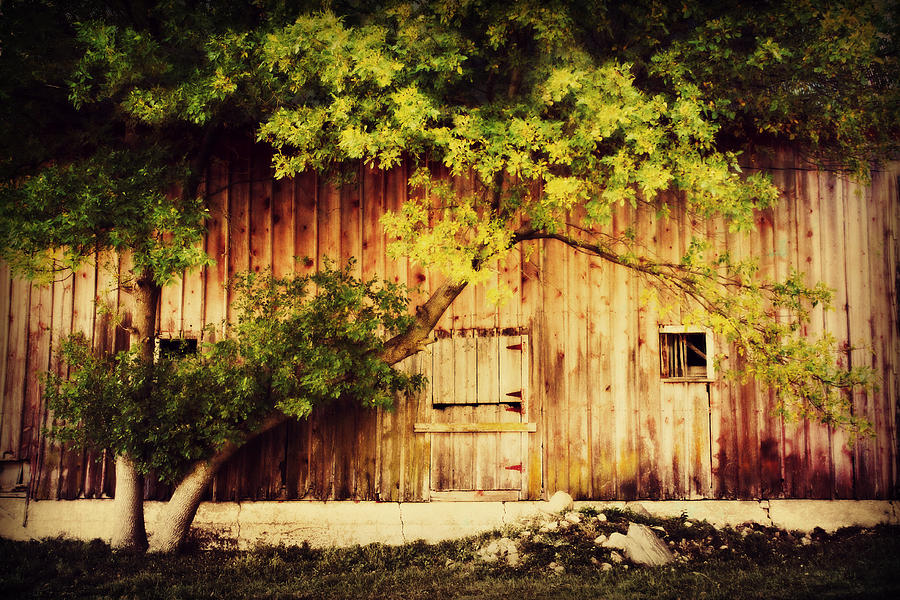 Barn Photograph - Natures Awning by Julie Hamilton