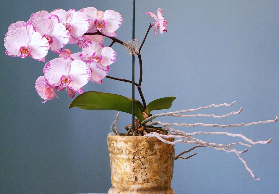 Flowers Photograph - Natures Balance by Cindy Gacha