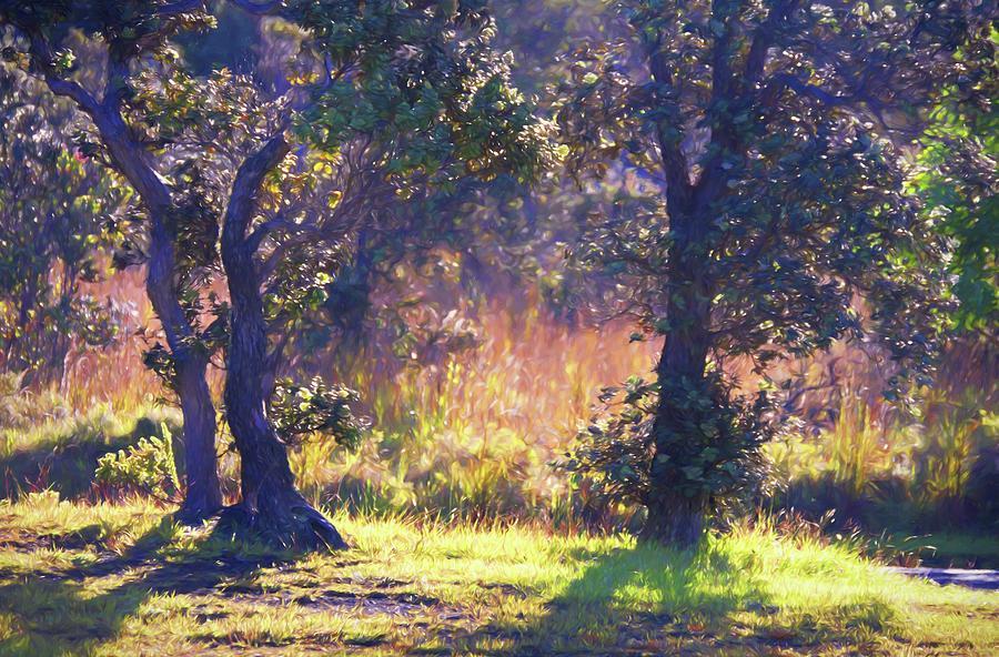 Natures Beauty 81 Photograph