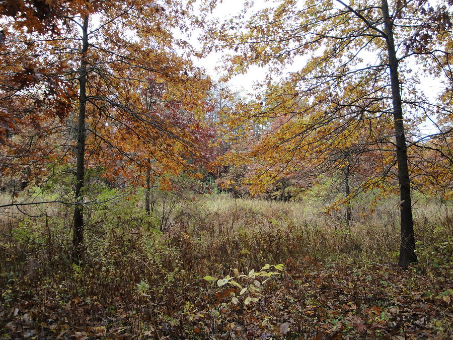 Autumn Landscape Photograph - Natures Expression-10 by Leonard Holland