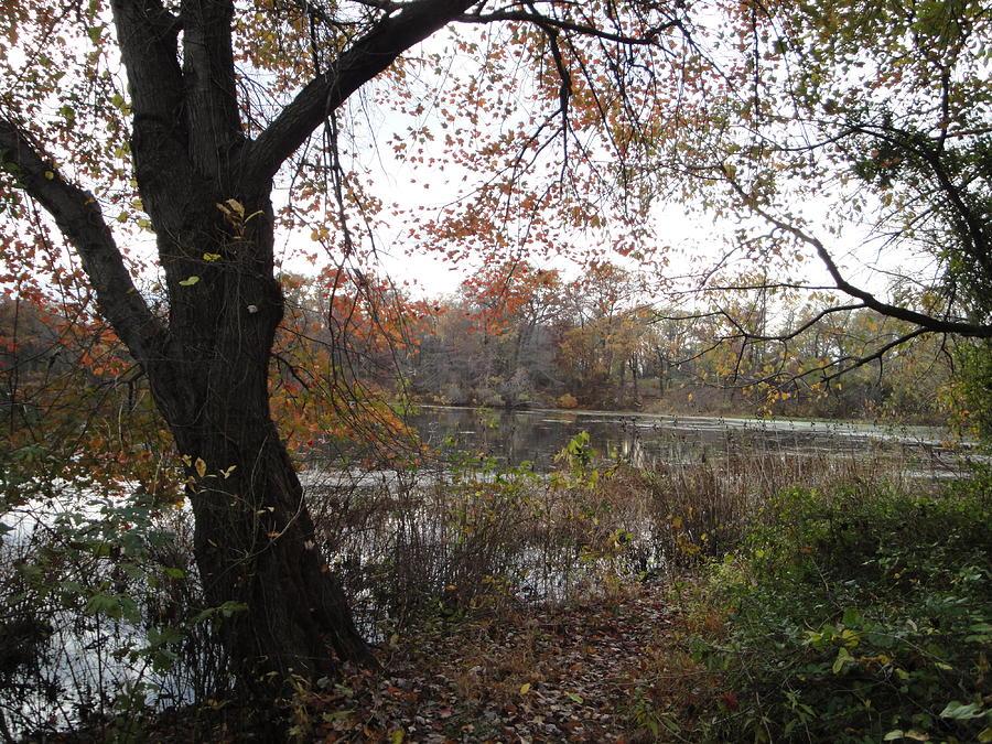 Autumn Landscape Photograph - Natures Expression-13 by Leonard Holland