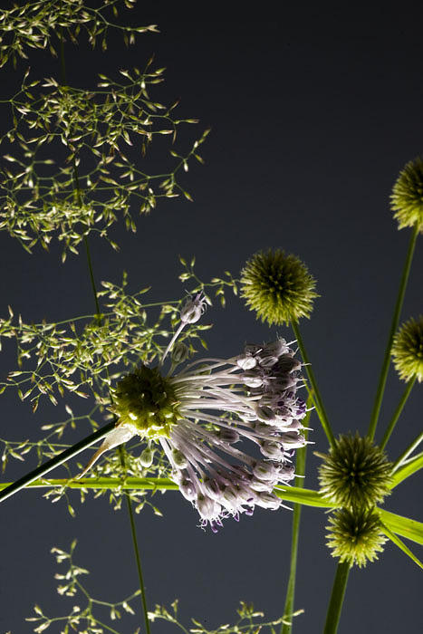 Weed Photograph - Natures Fireworks by Penny Burk