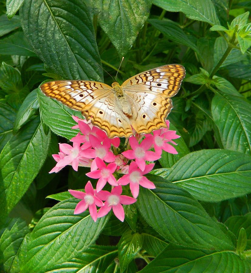 Natures Golden Treasure Photograph