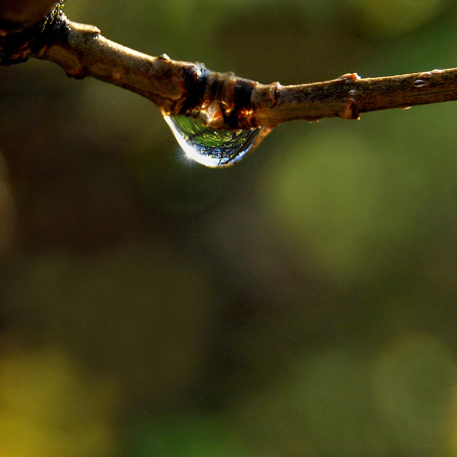 Waterdrop Photograph - Natures Light by Marilynne Bull