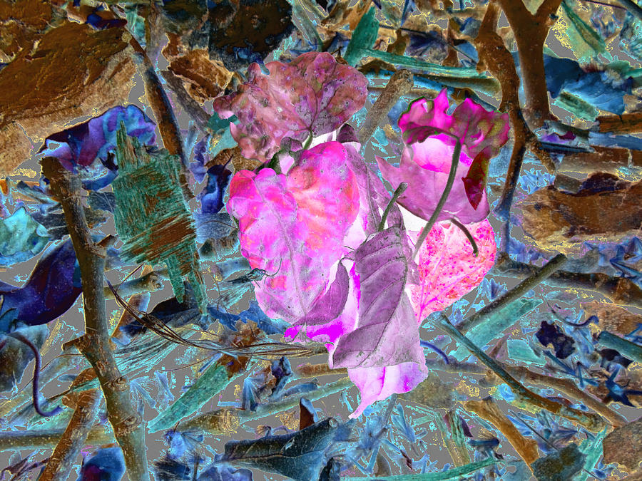 ☼ ♡ ☂   -   Great Affordable Cards: -   - 2.95 Each For A Pack Of 10: -   - -   - -   - 2.48 Each For A Pack Of 25 ☼ ♥ ☂ Photograph - Natures Love by Kenneth James