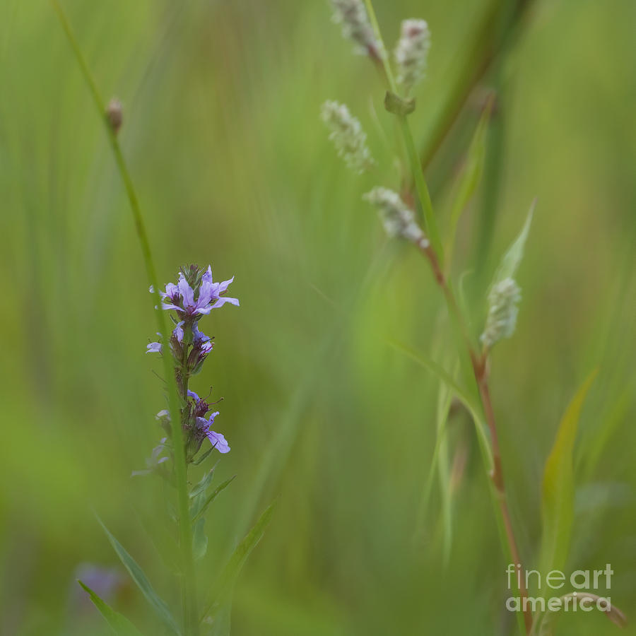 Soft Photograph - Natures Poetry... by Nina Stavlund