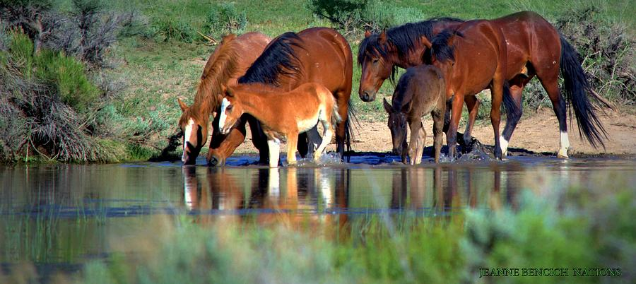 Wild Horses Photograph - Natures Reflections  by Jeanne  Bencich-Nations