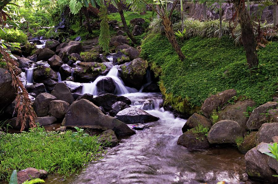 Natures Stream Photograph