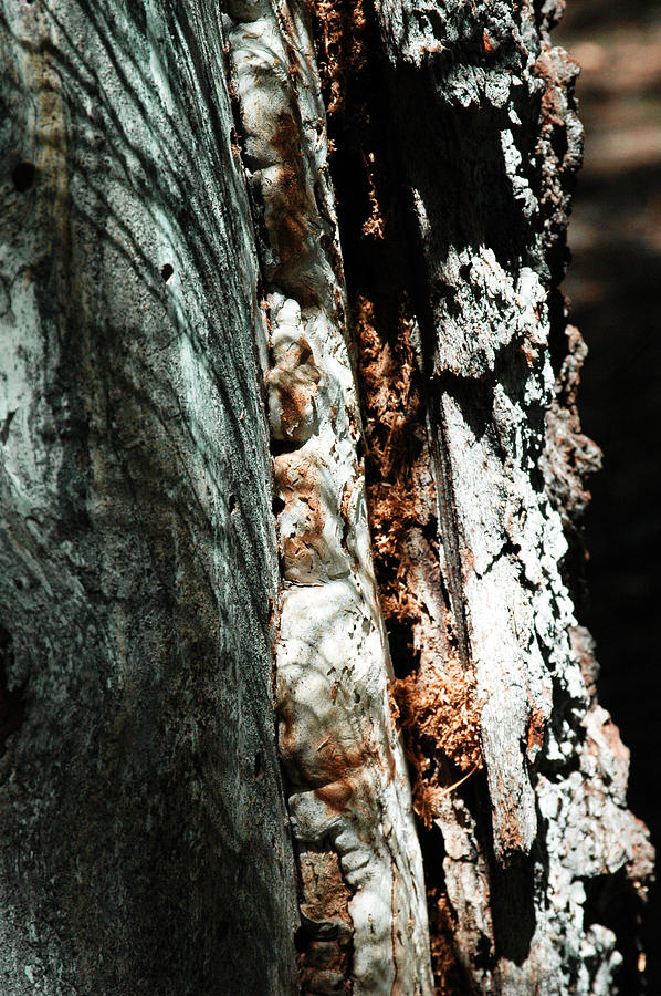 Natures Textures  Photograph by Brigid Nelson