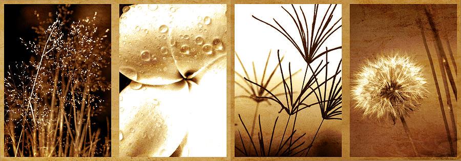 Natures Window Photograph