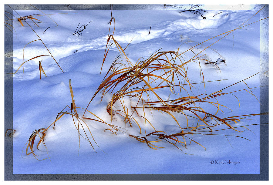Winter Scene Digital Art - Natures Winter Abstract #3 by Kae Cheatham