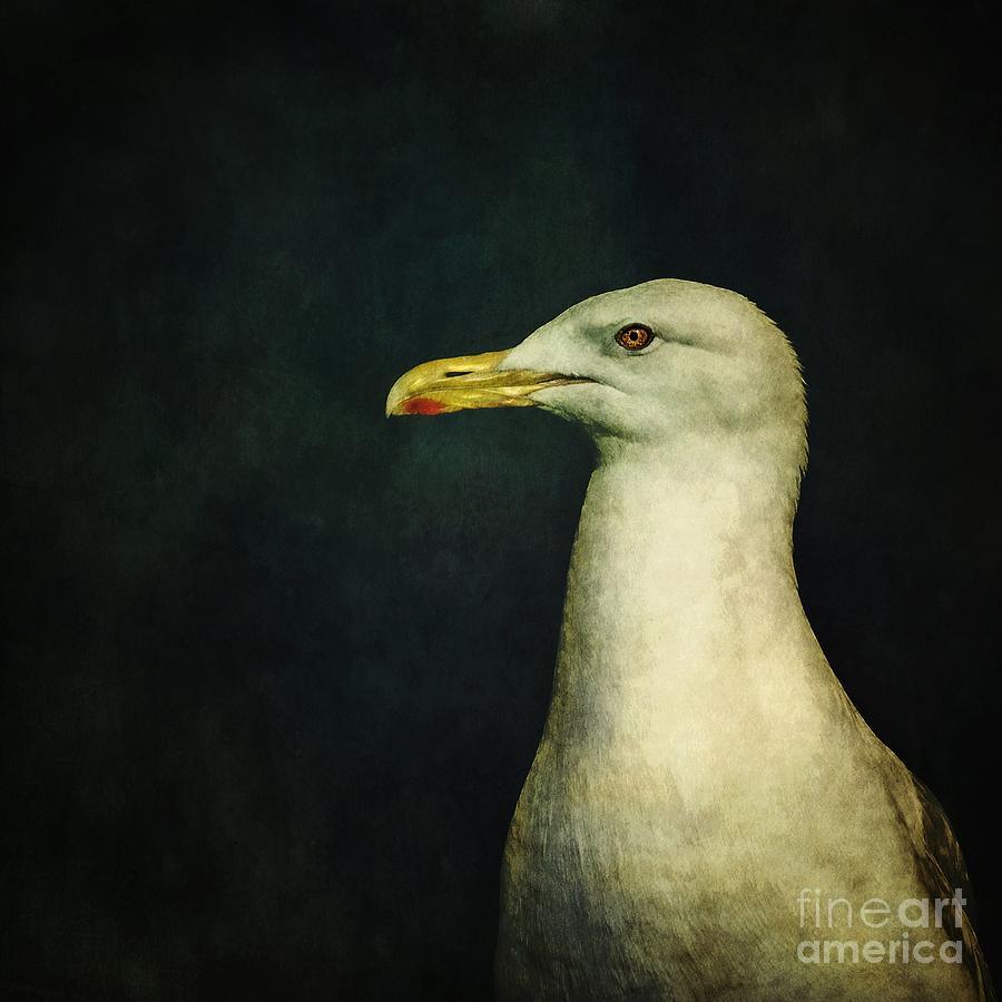 Seagull Photograph - Naujaq by Priska Wettstein