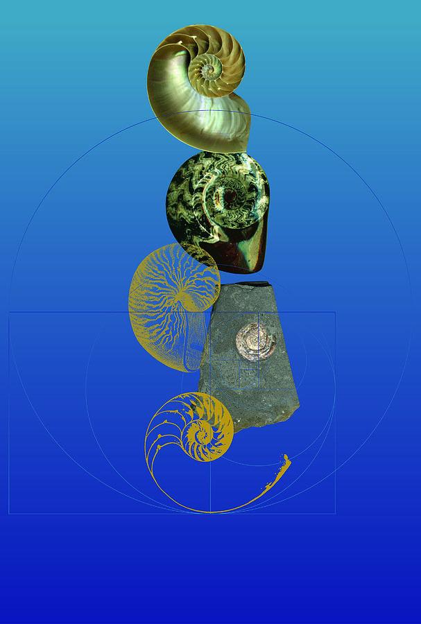 Nautilus Digital Art - Nautilus And Ammonite by David Strong