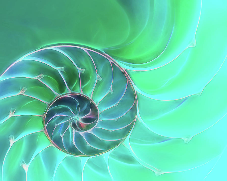 Nautilus Aqua Spiral by Gill Billington