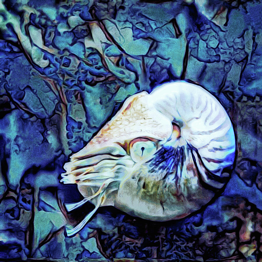 Nautilidae Mixed Media - Nautilus Blue by Susan Maxwell Schmidt