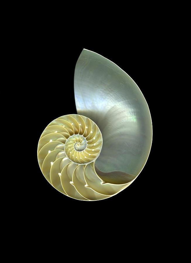Slanec Photograph - Nautilus Nr.1 by Christian Slanec