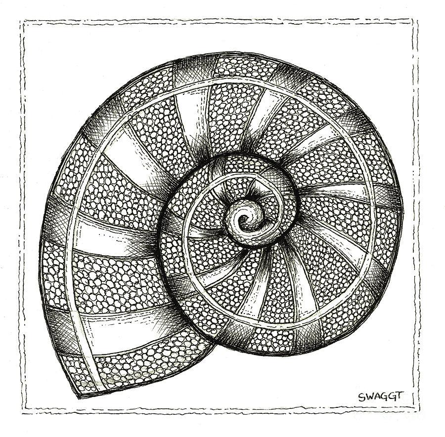 Nautilus Drawing - Nautilus by Stephanie Troxell