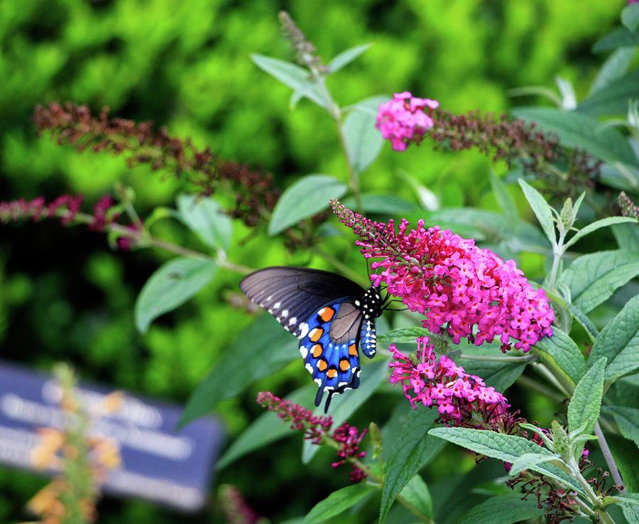 NC Arboretum Butterflies 1 by Matt Sexton