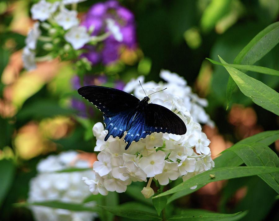 NC Arboretum Butterflies 2 by Matt Sexton