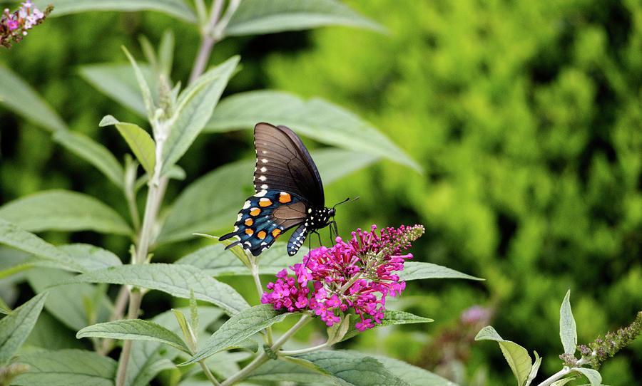 NC Arboretum butterflies 4 by Matt Sexton
