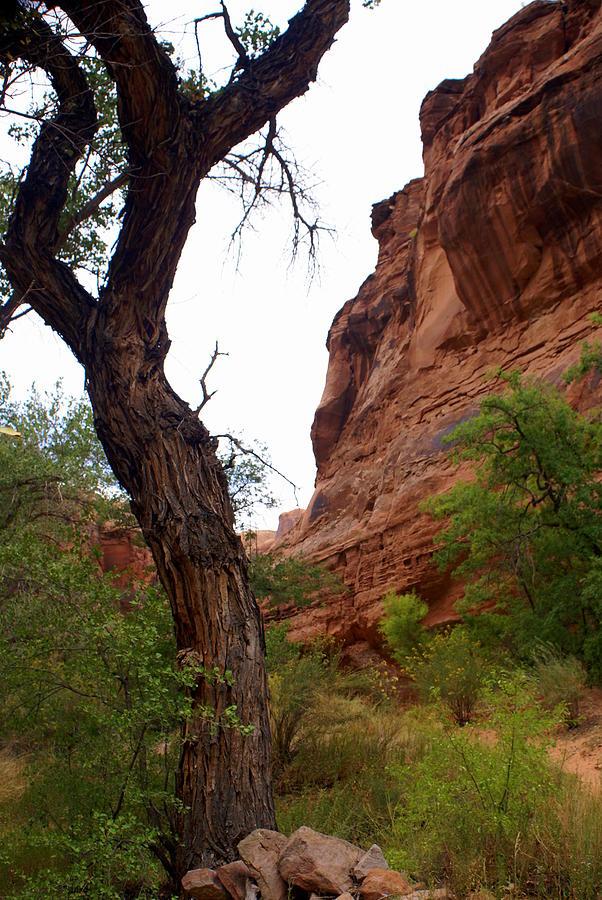 Canyon Photograph - Near Moab 2 by Marty Koch