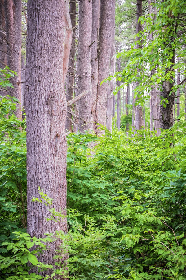 Woods Photograph - Near The Clearing by Diane Moore