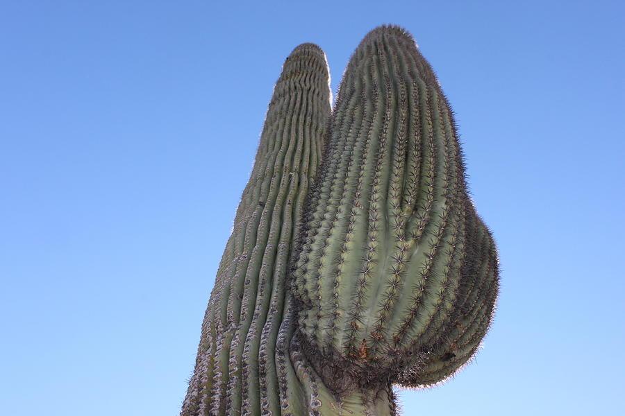 Wickenburg Photograph - Wickenburg Saguaro  by Antonio Romero