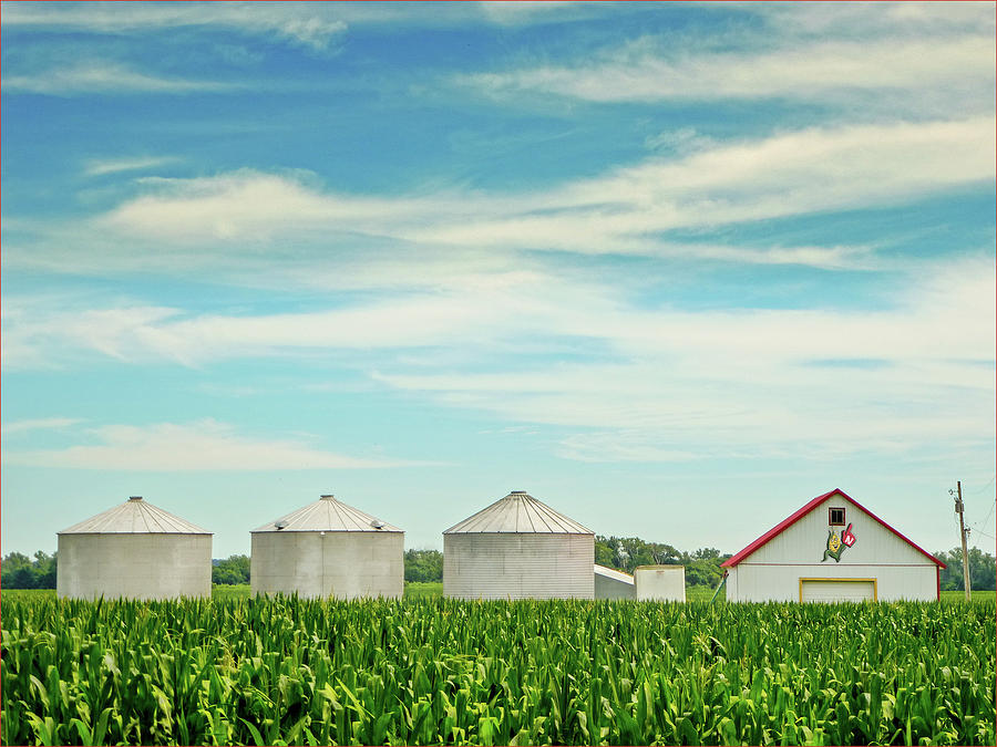 Corn Photograph - Nebraska Corn by John Anderson