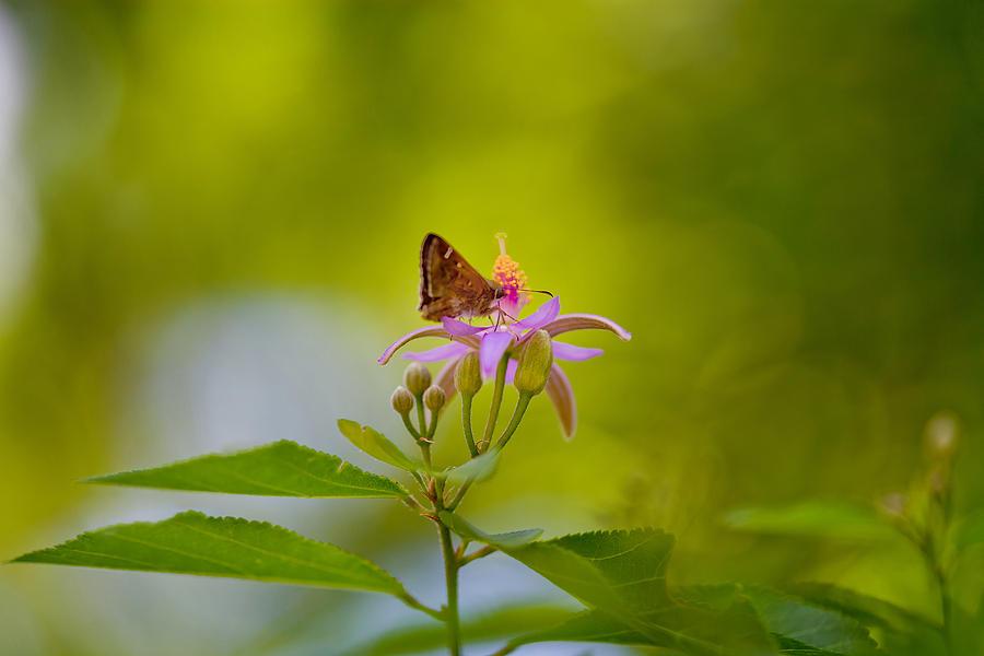 Leaf Photograph - Nectar Treat by Az Jackson