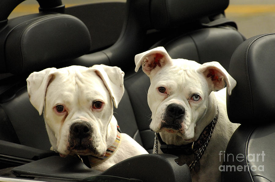 Dogs Photograph - Need A Lift by Marc Bittan