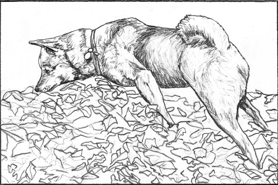 Neeko In The Leaf Pile Drawing By John Terwilliger