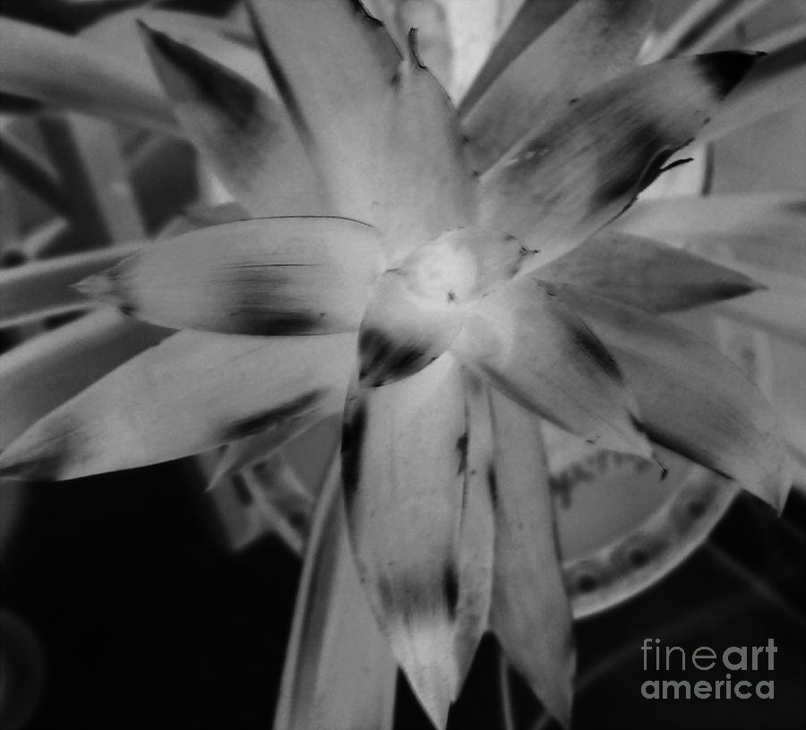 Black And White Photograph - Negative Bromeliad by Emily Kelley