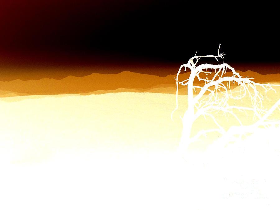 Negset Photograph by Lionel Martinez