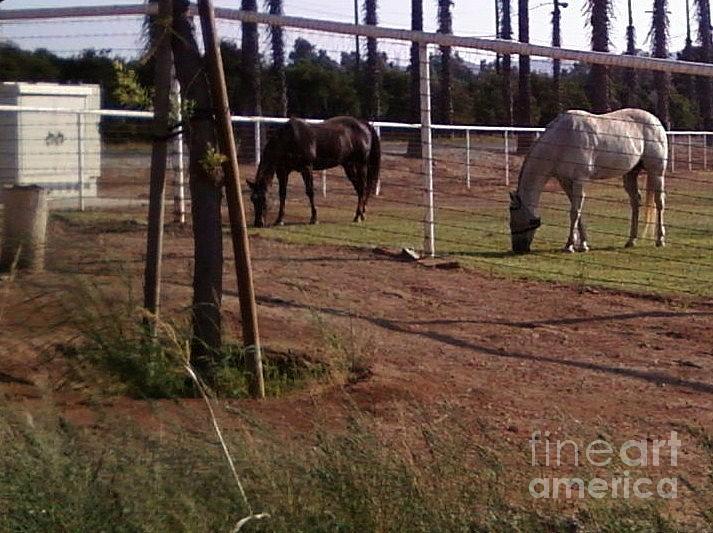 Horses Photograph - Neighbors by Jamey Balester
