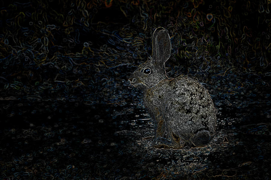 Neon Rabbit Photograph