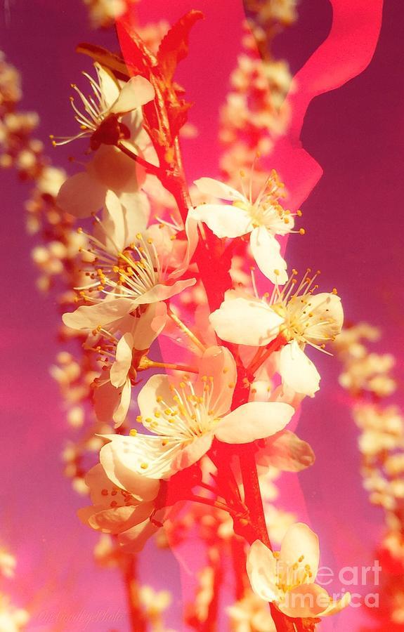 Neon Photograph - Neon Sakura by Marcel Stevahn