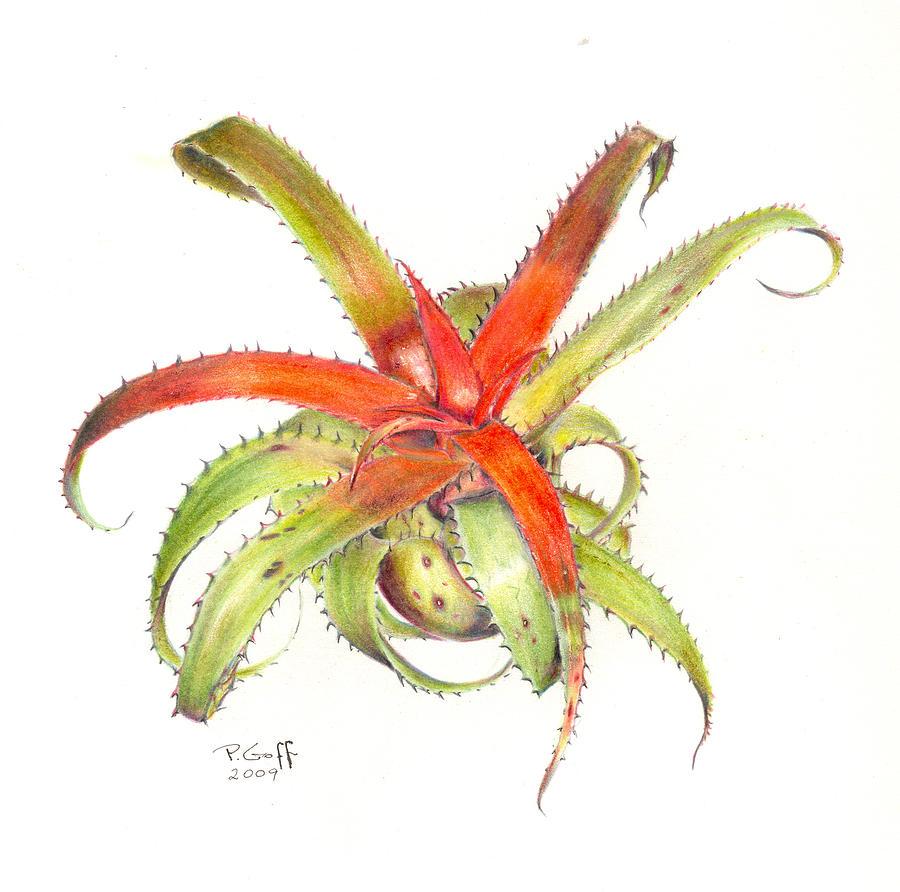 Neoregelia Painting - Neoregelia Pendula by Penrith Goff