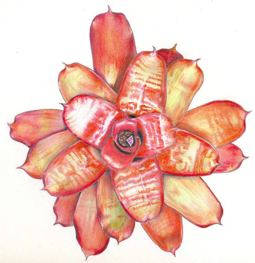 Bromeliad Painting - Neoregelia Small Wonder by Penrith Goff