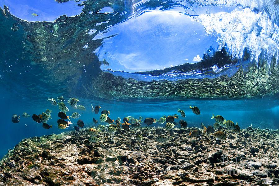 Underwater Photograph - Neptunes Eye by Sean Davey
