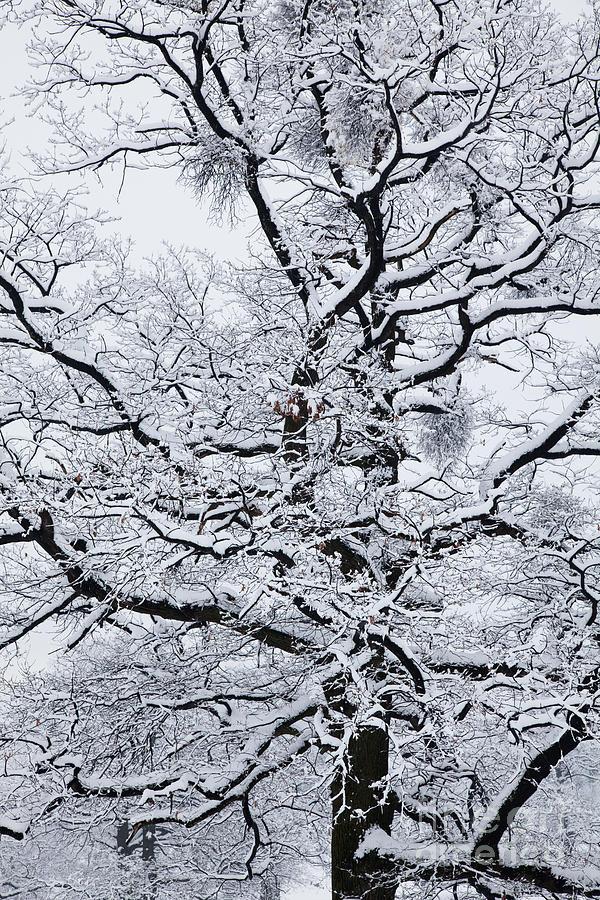 Winter Photograph - Nerves by Gabriela Insuratelu