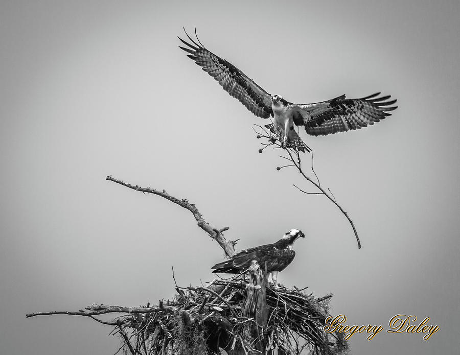 Nest Building 2m Photograph by Gregory Daley  MPSA