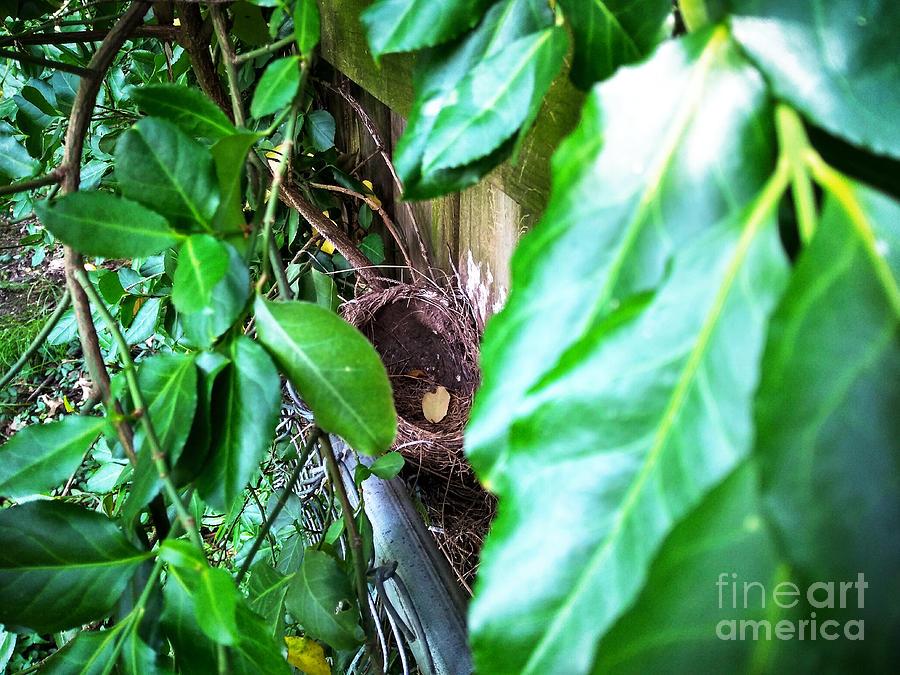Nest Photograph - Nest In Plain Sight by Robert Knight
