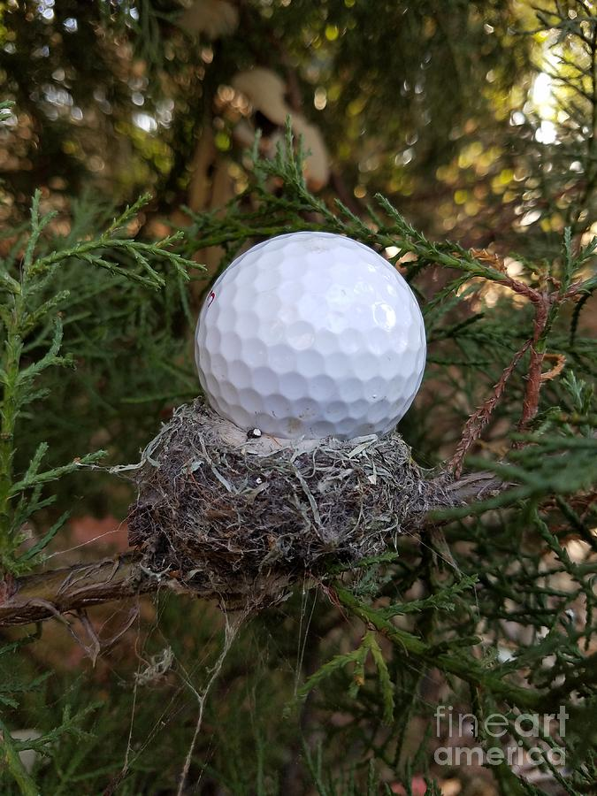 Golf Photograph - Nest Perspective by Craig Corwin